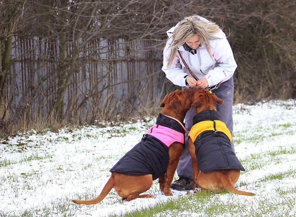 Jak pečovat o psa vzimě