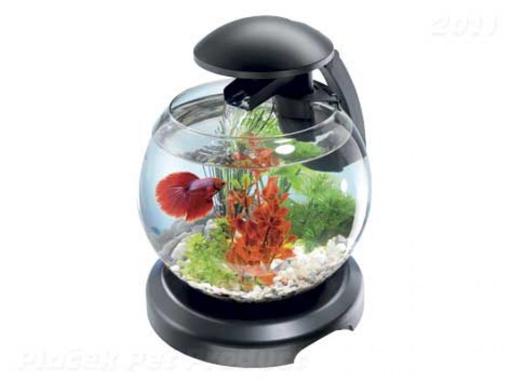 Začínáte s akvaristikou