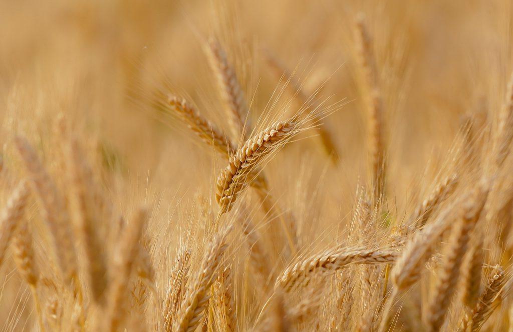 Corteva Agriscience oznamuje plán otevřít Centrum osivových technologií