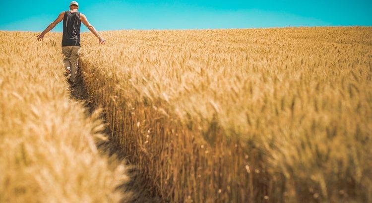 Program bude odměňovat zemědělce za rozšiřování inovací